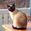 id:sockscats