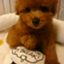 solan_miyoko