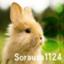 sorausa1124