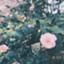 soraxpisu_vovo1219