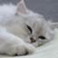 id:squarecat