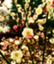 id:suika_sio