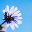 id:sun-flower8