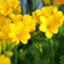id:sun0flower5386