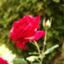id:sunny_in_california
