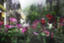id:sunny_rainkun