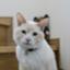 id:sushineko0301