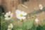 id:suuusaku