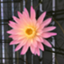 suzu-yukako_825602