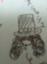 syokatu10