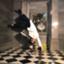 id:taiga_dr