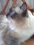 id:tama_arai