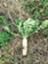 id:tanenotomo