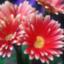 id:tanoshiirougo