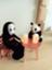 taro_panda