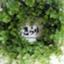id:tarotsakurako