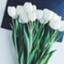 id:teamgreen
