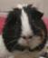 id:tenkai_kaiou