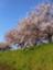 id:tetsunari_jp