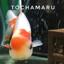 id:tochamaru
