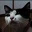 id:tokyocat