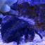 id:tom-ocean