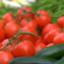 tomatoketchupkun