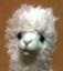 id:tori243