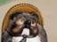 toru_obata