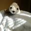 id:toshi_kko66