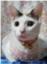 id:touemon