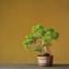 toukaen-bonsai