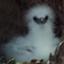 id:tropicbird