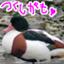 tsukushigamo