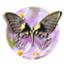 id:tukishiromia