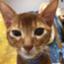 id:uenoys-113433