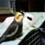 id:usagi-iro5525