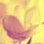 id:utsurogi