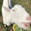 id:vegan-support-BiNatureen