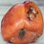 id:walnut963