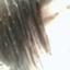 wasure_na___1