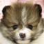 id:wataru_pgm