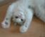 id:white-azalea