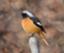 wildbird_zp