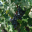 id:winemanga