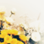 wisteria_s