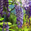 wisteriafinance