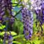id:wisteriafinance