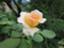 id:wong0110