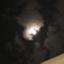 wtam_chatnoir